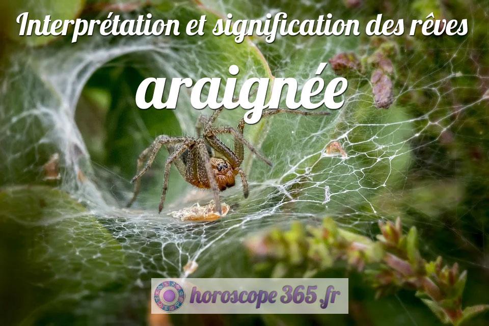 Rêve de Araignée