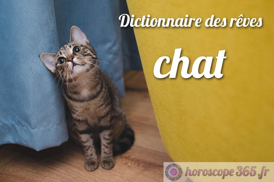 Que signifie le fait de rêver d'un chat?