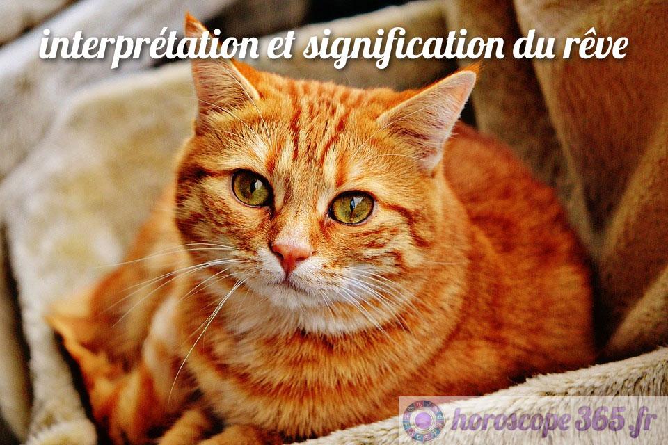 Interprétation et signification du rêve : chat