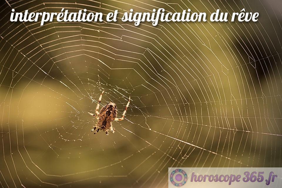 Dictionnaire des rêves : araignée