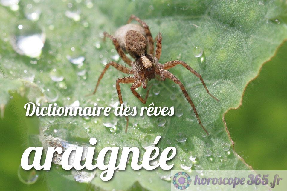 Interprétation et signification du rêve : araignée