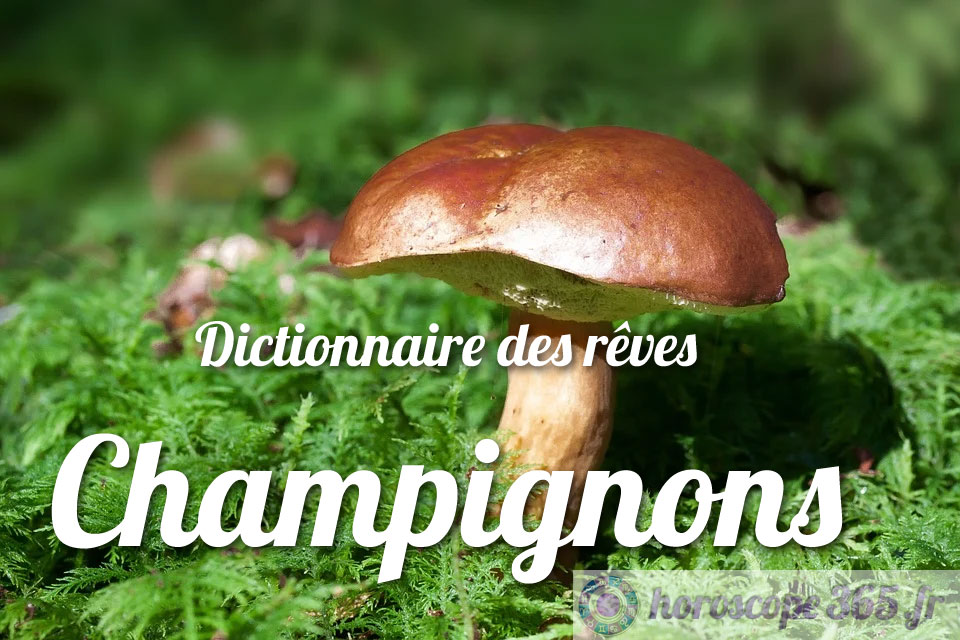 Dictionnaire des rêves : Champignons