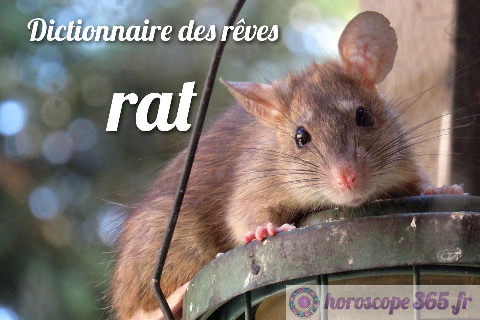 Dictionnaire des rêves : rat