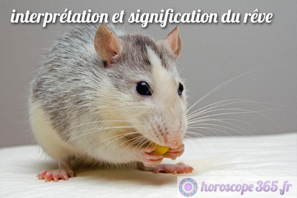 Rêve de rat
