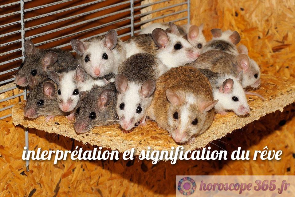 Que signifie le fait de rêver de souris?